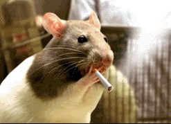 Mouse Smoking